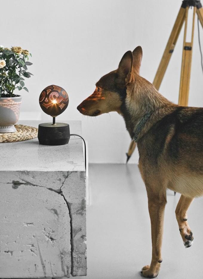 table soloist handmade coconut lamp